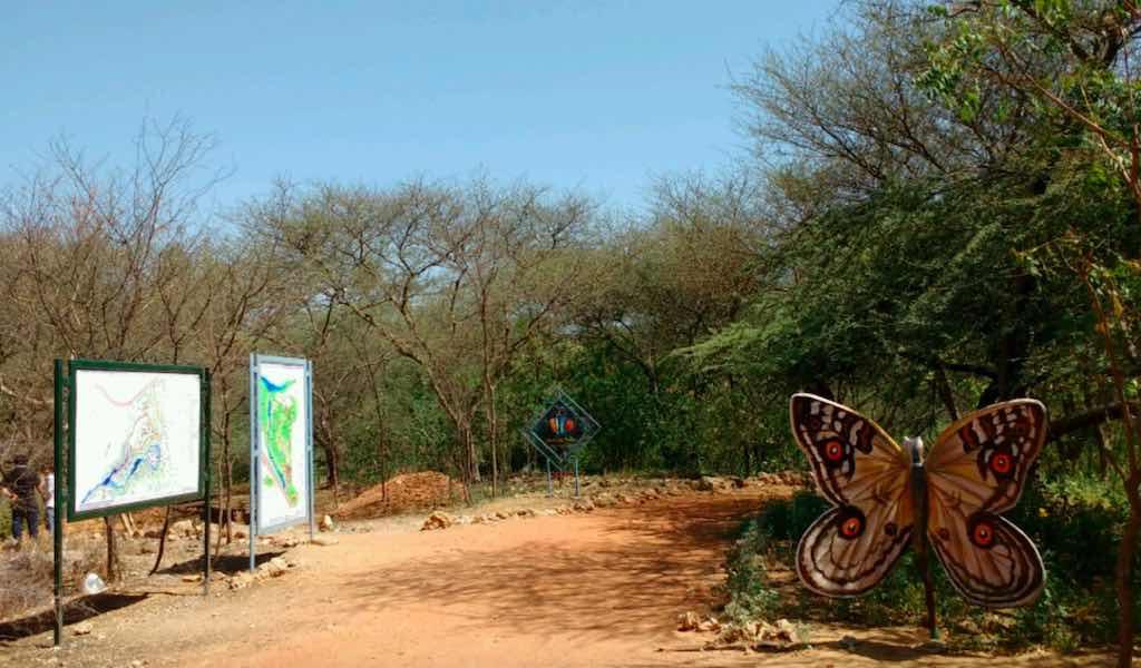 Smriti Van jaipur butterfly garden