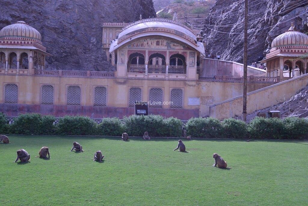 monkey-temple-jaipur-8